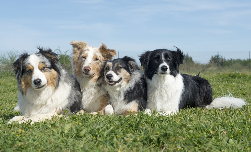 group of dogs lying down in the nature