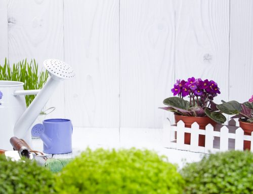 Easy Balcony Gardening Tips for Mature Adults!