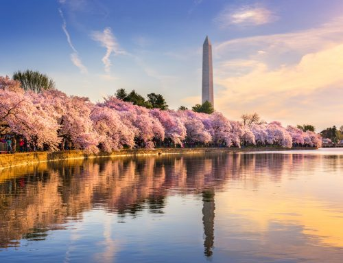 Mature Travellers: 5 Must See Cherry Blossom Destinations