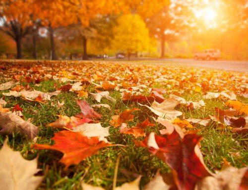 6 Easy Tips for Enjoying Fall